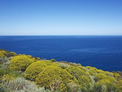 Tree spurge on Stromboli Island-Frank Krahmer-Photographic Print
