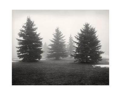 Tree, Study #6-Andrew Ren-Art Print