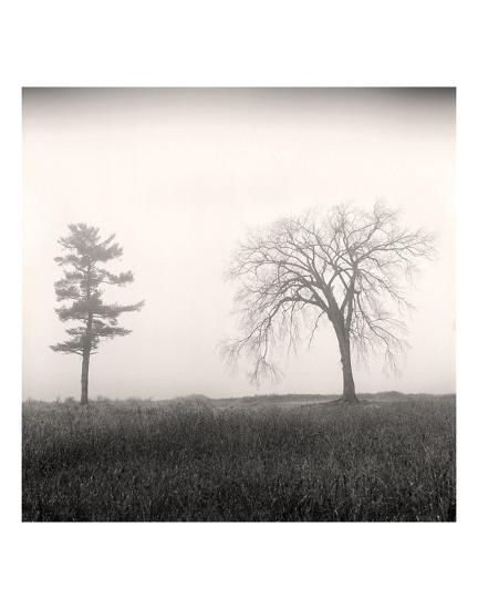 Tree, Study #8-Andrew Ren-Art Print