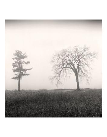 https://imgc.artprintimages.com/img/print/tree-study-8_u-l-f8cp2m0.jpg?p=0