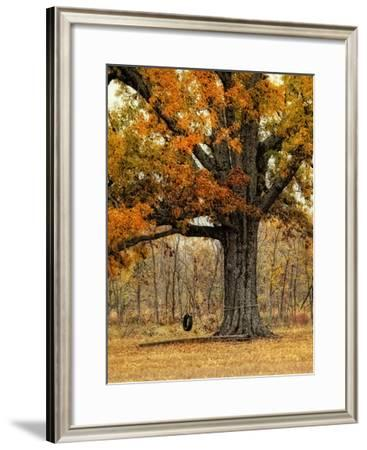 Tree Swing-Danny Head-Framed Giclee Print