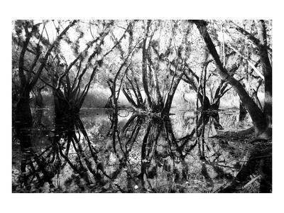 https://imgc.artprintimages.com/img/print/tree-symphony_u-l-f74kes0.jpg?p=0