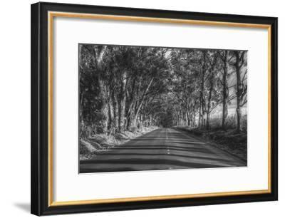 Tree Tunnel to Old Koloa Town (B/W), Kauai Hawaii-Vincent James-Framed Photographic Print