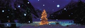 Tree with Lights and Chateau, Lake Louise, Alberta, Canada