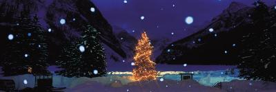 Tree with Lights and Chateau, Lake Louise, Alberta, Canada--Photographic Print
