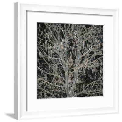Tree with Seedpods at Night-Micha Pawlitzki-Framed Photographic Print