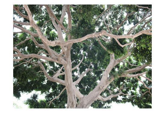 Tree-Stephanie Frances-Art Print