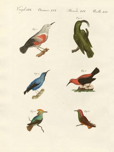 Treecreepers and Hummingbirds--Giclee Print