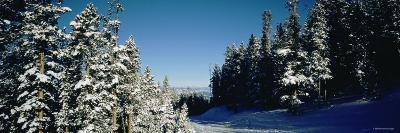 Treelined Ski Track, Winter Park Resort, Colorado, USA--Photographic Print