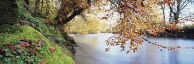 Trees Along a River, River Dart, Bickleigh, Mid Devon, Devon, England--Photographic Print