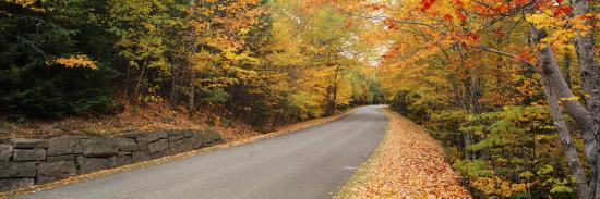 Trees Along a Road, Park Loop Road, Acadia National Park, Maine--Photographic Print