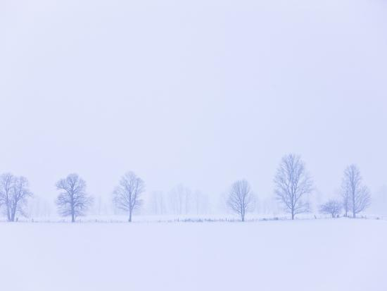 Trees Along Fence in Winter-Jim Craigmyle-Photographic Print