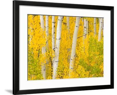 Trees and Autumn Foliage-John Eastcott & Yva Momatiuk-Framed Photographic Print