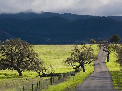 Trees and Country Road, Santa Barbara Wine Country, Santa Ynez, Southern California, Usa-Walter Bibikow-Photographic Print