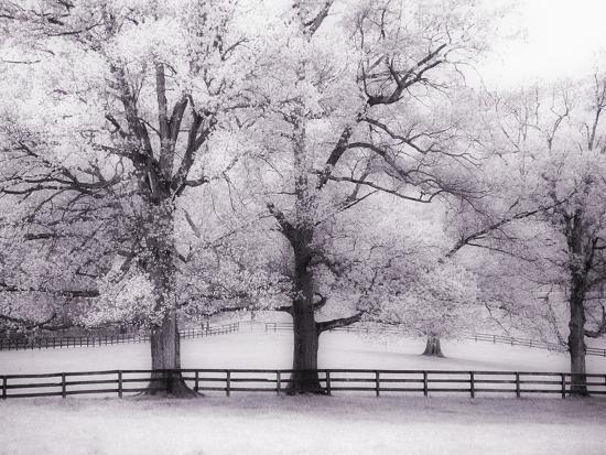 Trees and Fence in Snowy Field-Robert Llewellyn-Photographic Print