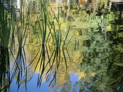 Trees and Grasses Reflected in a Pond in Grand Teton National Park-National Geographic Photographer-Photographic Print