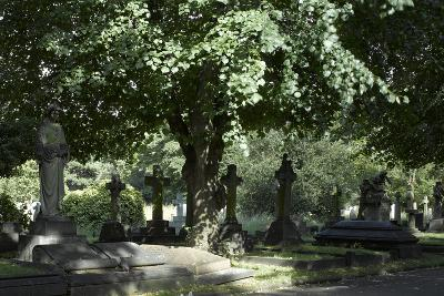 Trees and Graves at Brompton Cemetery, Kensington, London-Richard Bryant-Photographic Print