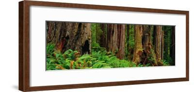 Trees and Plants in a Forest, Prairie Creek Redwoods State Park, California, USA