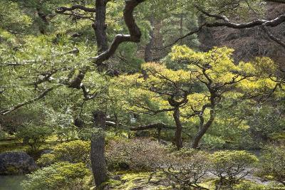 Trees and Shrubs at the Well Tended Japanese Garden at Ginkaku-Ji-Macduff Everton-Photographic Print