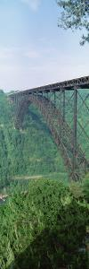 Trees Around the New River Gorge Bridge, Route 19, West Virginia, USA