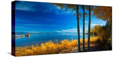Trees at Lake Tahoe California USA--Stretched Canvas Print