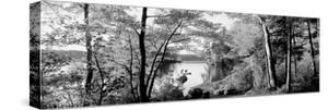 Trees at the Lakeside, Great Sacandaga Lake, Adirondack Mountains, New York State, USA
