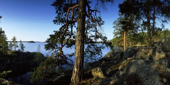 Trees at the Lakeside, Saimaa, Puumala, Southern Savonia, Eastern Finland, Finland--Photographic Print