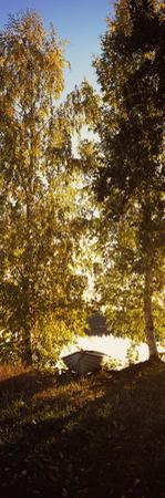 Trees at the Riverside at Dawn, Vuoksi River, Imatra, Finland