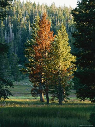 Trees Bearing the Colors of Fall--Photographic Print