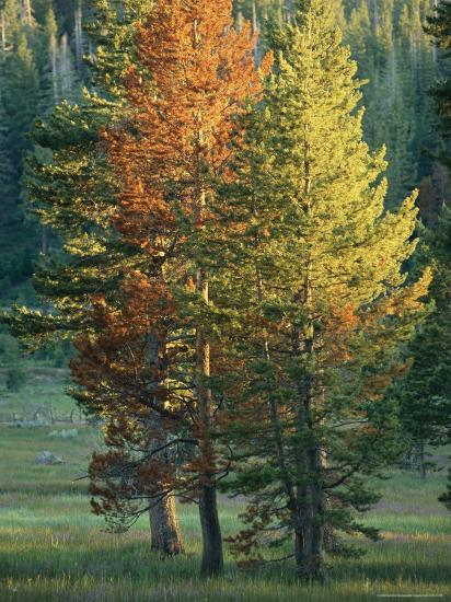 Trees Bearing the Colors of Fall-Raymond Gehman-Photographic Print