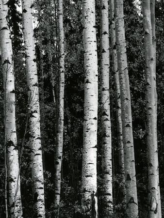 https://imgc.artprintimages.com/img/print/trees-c-1970_u-l-q1g6w9j0.jpg?p=0