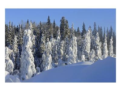 Trees Covered in Snow-Mike Grandmaison-Art Print