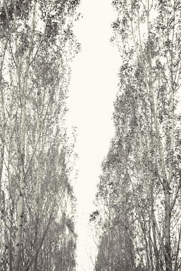 Trees III-Karyn Millet-Photographic Print