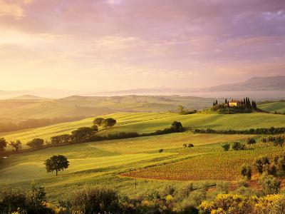 Trees in a Field at Sunrise, Villa Belvedere, Val D'Orcia, Siena Province, Tuscany, Italy--Photographic Print