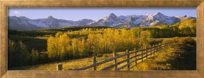 Trees In A Field Near A Wooden Fence Dallas Divide San Juan Mountains Colorado Usa Photographic Print Art Com