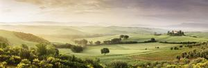 Trees in a Field, Villa Belvedere, San Quirico D'Orcia, Val D'Orcia, Siena Province, Tuscany, Italy