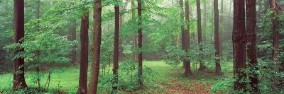 Trees in a Forest, Chestnut Ridge County Park, Orchard Park, Erie County, New York State, USA--Photographic Print