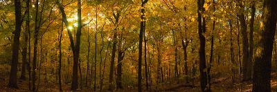 Trees in a Forest, Delnor Woods Park, St. Charles, Kane County, Illinois, USA--Photographic Print