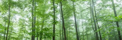 Trees in a Forest, Hamburg, New York State, USA--Photographic Print