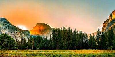 Trees in a Forest with Mountain Range in the Background, Yosemite National Park, California, USA