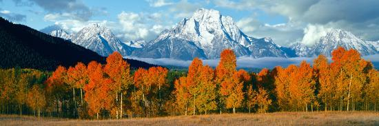 Trees in a Forest with Snowcapped Mountain Range in the Background, Teton Range, Oxbow Bend--Photographic Print