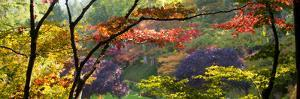 Trees in a Garden, Butchart Gardens, Victoria, Vancouver Island, British Columbia, Canada