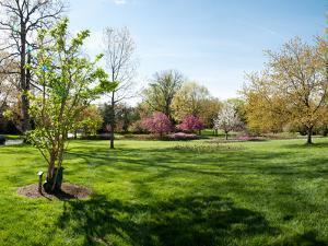 Trees in a Garden, Sherwood Gardens, Baltimore, Maryland, USA