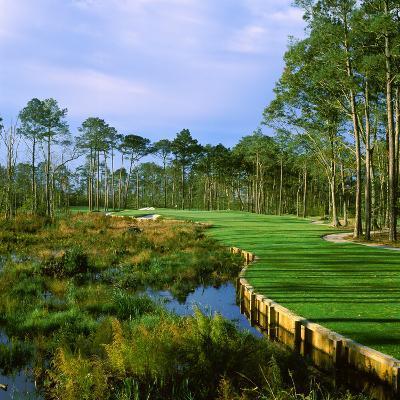 Trees in a Golf Course, Kilmarlic Golf Club, Powells Point, Currituck County, North Carolina, USA--Photographic Print