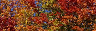 Trees in Adirondack Mountains, New York State, USA--Photographic Print