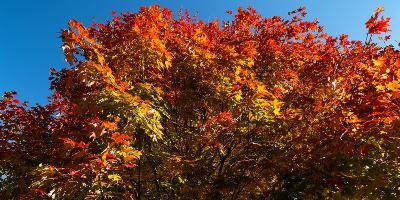 Trees in autumn, Bath, Sagadahoc County, Maine, USA--Photographic Print