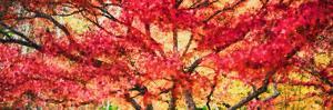 Trees in autumn, Oregon, USA