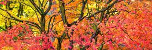 Trees in autumn, Westonbirt Arboretum, Gloucestershire, England