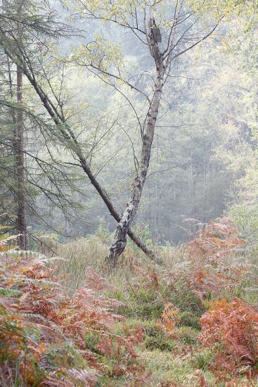 Trees in English Woodland-David Baker-Photographic Print