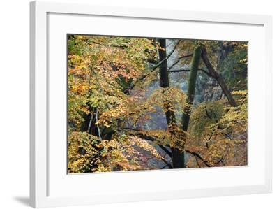 Trees in English Woodland-David Baker-Framed Photographic Print